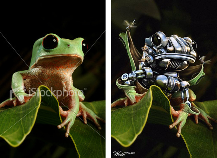 robotic frog tutorial